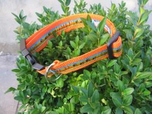 """Wild.Tatze"" orange Halsband"