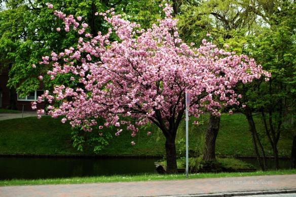 Frühling in Jever